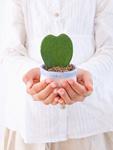 鉢植えを持つ少女の手元