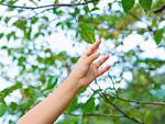 枝に触ろうとする手