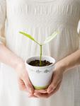 鉢植えを持つ妊婦