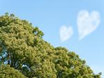 ハート形の雲と森林