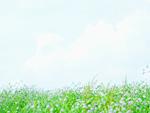 青空と花畑
