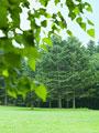 森林と草原