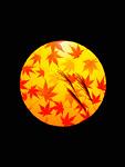 カエデの葉とススキ
