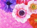 鮮やかな花のイメージ