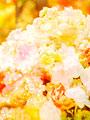 上品な花のイメージ