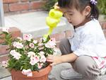 鉢植えの花に水やりをする女の子
