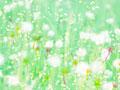 タンポポの綿毛イメージ