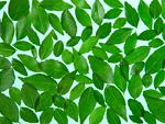 たくさんの葉(エコロジーイメージ)