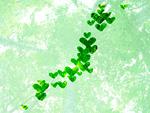 ハートの葉で作られた日本列島(エコロジーイメージ)