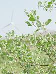 枝葉越しの風力発電機