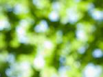 木漏れ日イメージ