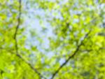 木々の葉イメージ