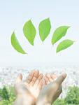 手と緑の葉