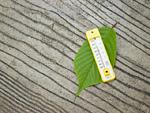 葉の上に置かれた温度計