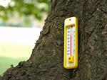 木の幹と温度計