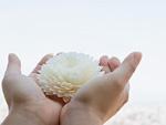 白い花を持つ手