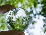 ガラス玉に映る木々