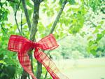 木に結んだリボン