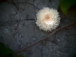 蔦のからまるコンクリートと白い花