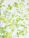 緑色の小花