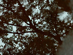 水たまりに写った木の影
