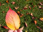 落ち葉を持つ手