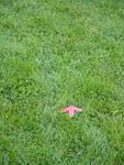 芝生に矢印