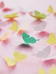カラフルな蝶