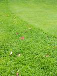 パークゴルフ場の落ち葉