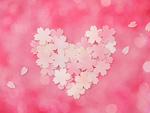 桜の花で作ったハート