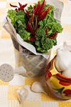 菜の花、ニンニク、唐辛子イメージ