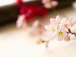 桜と賞状筒