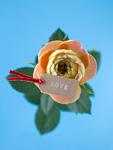 バラとメッセージカード