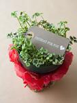 鉢植えのクローバーとメッセージカード