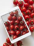 ミニトマトとタブレットPC