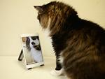タブレットPCと猫