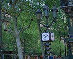 街灯と街路樹