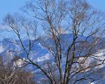 冬枯れの樹木