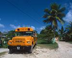 ヤシの木とバス