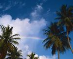 虹のかかる空とヤシ