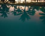 水面に映るヤシの木