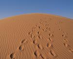 砂丘の足跡
