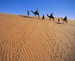 砂漠を行くラクダと人