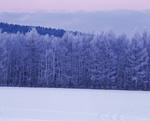 雪原と森林