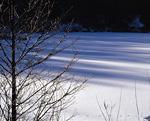 樹木と雪原