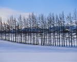 雪原と樹木