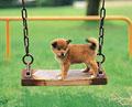 タイトル:子犬