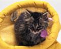 タイトル:子猫