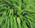タイトル:野草