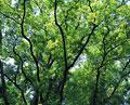 タイトル:新緑